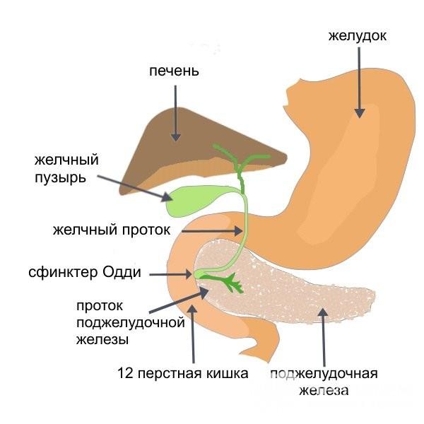 Схема: дисфункция сфинктера Одди