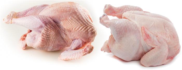 Тушка индейки и курицы