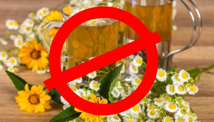 Запрет на употребления чая из ромашки